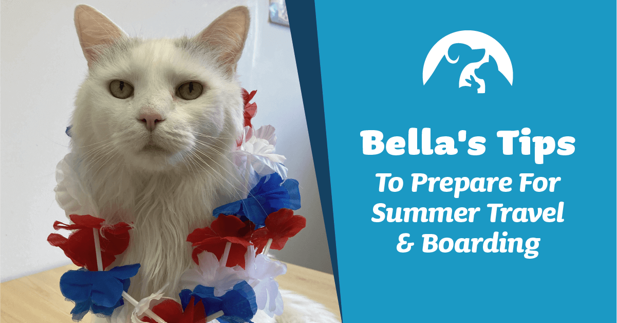 Bella's Tips To Prepare For Summer Travel & Boarding