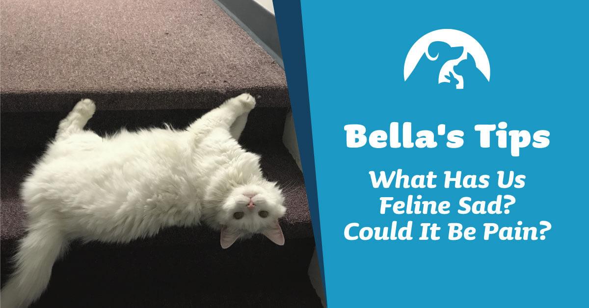 What Has Us Feline Sad? Could It Be Pain?
